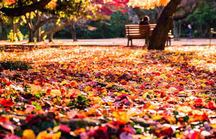 東京にある紅葉スポットは、時期によっていろいろな表情を楽しむことができます。紅葉のピークの時期もいいですが、あえて散りかけたころに足を運んで、「落ち葉のじゅうたん」を堪能するのもおすすめ。ノスタルジックな東京の秋を、ぜひ満喫してくださいね。