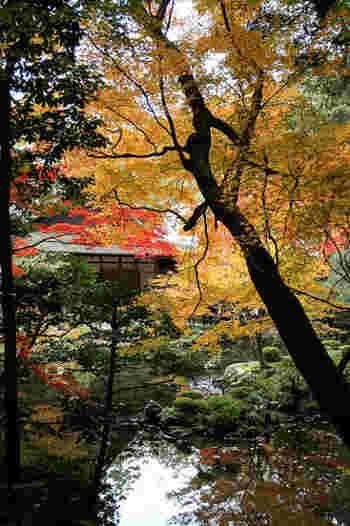 「南禅院」の見所は、鎌倉末期の代表的な池泉回遊式庭園。  境内には、方丈の庭と方丈前庭の二つがあり、深い木々に包まれた「方丈の庭」は、亀山法皇による作庭と伝わり、京都の三名勝史跡庭園の一つに数えられています。 【12月初旬の南禅院「方丈の庭」】