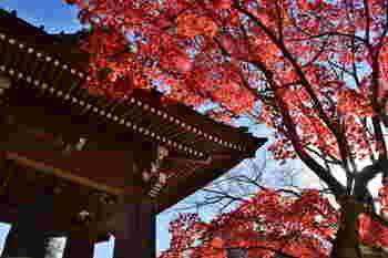 観光スポットからは少し離れた、扇ガ谷という静かな住宅街にある「海蔵寺」。臨済宗建長寺派の寺院で、鎌倉時代に創建されました。大きなお寺ではありませんが、1年中季節の草花が楽しめ、鎌倉通には花のお寺として知られています。もちろん秋には、美しい紅葉も楽しめます。