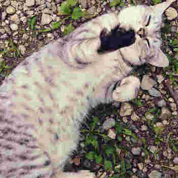猫好きさんも大歓迎。お店では看板猫が数匹お出迎えしてくれます。ゆっくりのんびりした時間を一緒に過ごしに出かけませんか?