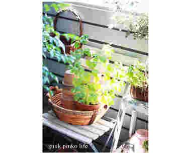 お庭やベランダのグリーンたちをかごに入れて。かごはグリーンカバーとしても植木鉢を入れるだけでおしゃれ。 かごのあいたスペースに、収納とディスプレイを兼ねて、植木鉢をスタッキングしているのは、真似したい上級テクニックですね。