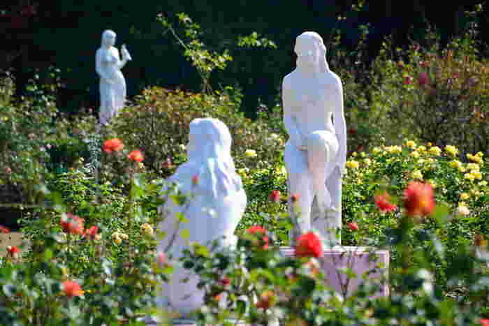 秋は10月中旬~11月中旬頃が見頃。園内では、日本人として初めてオール・アメリカン・ローズ・セレクション賞を受賞した鈴木省三さんの青いバラ「青空」など珍しい品種も見ることができますよ。電車でアクセスしやすいので、気軽に散策を楽しめるのも良いですね。