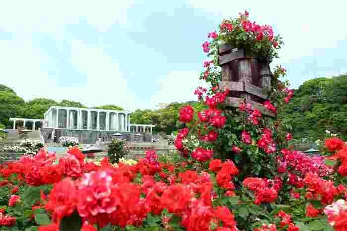 噴水公園にある「王侯貴族のバラ園」。様々な種類のバラが植えられ、春(5月中旬〜6月下旬)と秋(10月中旬〜11月下旬)に見ごろを向かえます。
