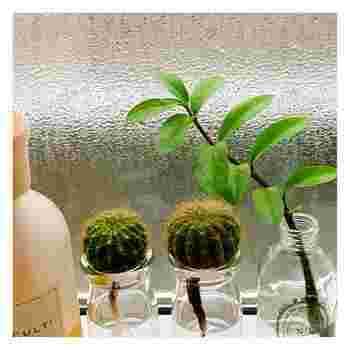 """暑い夏に涼しさをもたらすために重要なのが、水や風が""""見える""""こと。そこで、部屋の中で簡単にできる水耕栽培をしてみませんか?お花はもちろん、使いたい時にさっと摘み取れる野菜の水耕栽培も人気。使い終わった野菜の根や茎を使った再生栽培(リボベジ)なら、初心者さんでも気軽に挑戦できますよ。"""