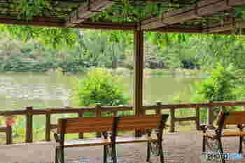 1917年(大正6年)に開園したこちらの公園は、去年100周年を迎え、都内の桜の名所としても知られています。池の周りに散策路がありお散歩にぴったり。ベンチに座って風に吹かれていると本当に気持ちがいいんですよ。