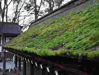 「河合神社」は「下鴨神社」の摂末社。正式名称は、「鴨川合坐小社宅神社(かものかわいにいますおこべそじんじゃ)」といいます。表参道に入ってすぐ左手、糺の森の南西に位置しています。