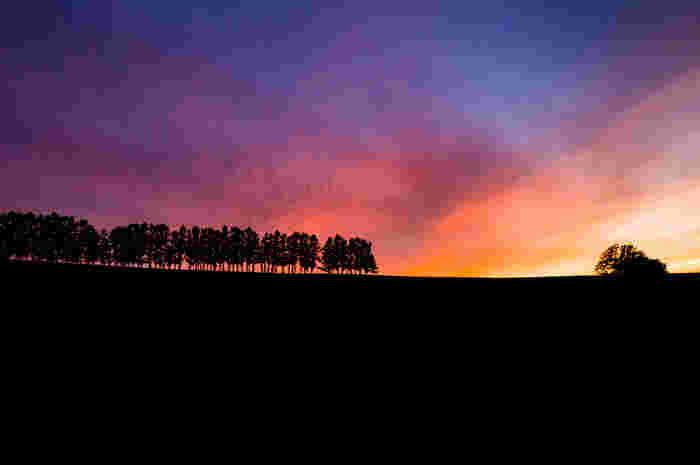 美瑛の丘に佇む木。こんな絵になる光景が美瑛のあちこちで展開されています。いくつかの木には名前もつけられており、丘巡りならぬ木巡りを楽しむ方も多いそう。