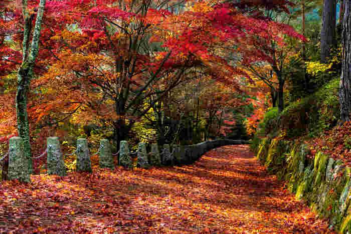 吉野山奥千本なる高城山展望台への坂道の美しさは格別です。散り紅葉が道を覆いつくす様は、まるで紅葉の絨毯を敷き詰めたかのようです。
