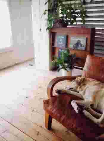 犬が寝ちゃうくらい居心地の良いソファ。