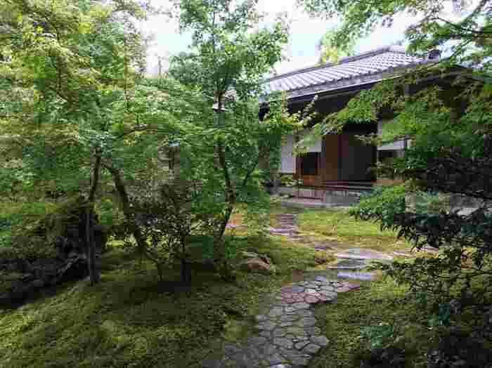 苔と楓が清々しい、新緑の頃の「寿立庵の庭」。