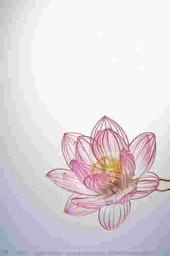 夏の朝、まだ涼しい空気のなかで咲く清浄の花。かげろうの羽根のように薄く透明な花びらは、そのまま空気に溶けて行くかのごとく。 Photo by Ryoukan Abe (www.ryoukan-abe.com)