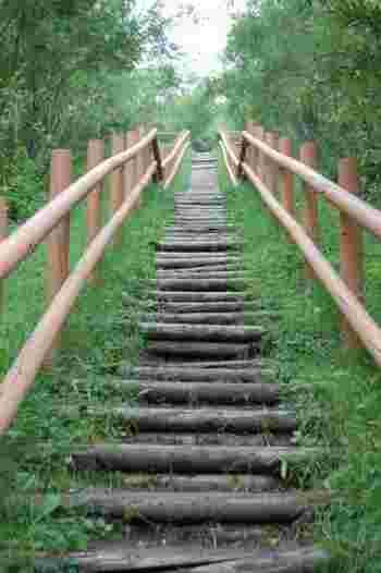 自然の丸太を並べた階段は、段差も高く延々と伸びています。でも、この階段をのぼった先には、きっと素敵な眺めが待っているはず。