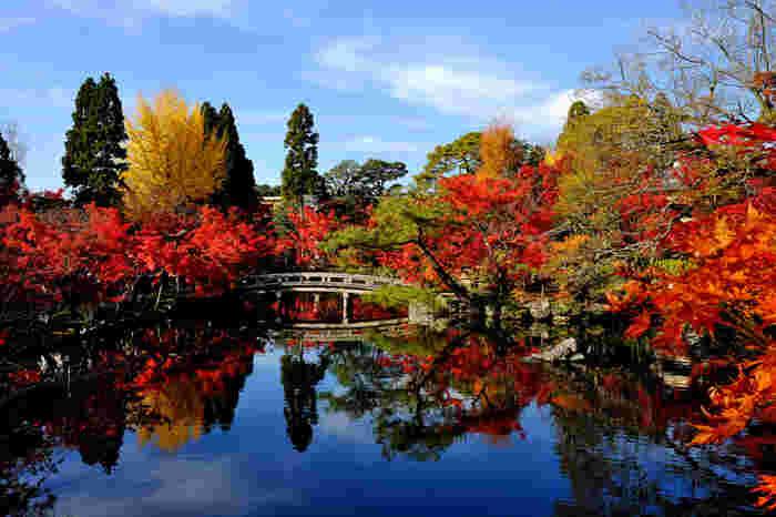 美しい紅葉が人気の京都の秋。おでかけ先に選ぶ人も多いのでは?京都は湯豆腐や湯葉、おばんざいなどおいしいものがたくさんありますが、その中でスイーツと言えば抹茶が有名ですよね。