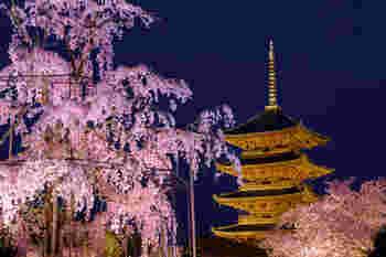 新幹線からも見える五重塔がシンボルの東寺。ソメイヨシノはもちろん、圧巻の美しさの枝垂桜は、ライトアップされるとそこは幻想的な世界に。京都駅から近くアクセスが良いので、おすすめです。