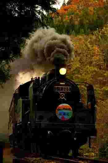 ちなみに、只見線の紅葉狩りが全国的に注目されるきっかけになったのが、「SL只見線紅葉号」。  レトロなSL列車で、まるでタイムスリップをした気持ちになりますね。錦秋のなかに響き渡る汽笛の音が、なんとも言えない情緒を感じさせます。  今年の「SL只見線紅葉号」は10月31日、11月1日に運行しますが、大人気で、すぐに乗車券は売れきれになったそう。機会があればSLから眺める紅葉を楽しみたいものですね♪