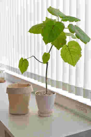 観葉植物を入れる植木鉢は、陶器などの自然素材で作られたものがおすすめです。プラスチックなどの場合は、自然素材でできたもので鉢をカバーすると良いでしょう。観葉植物の状態はこまめにチェックして、ほこりなども取り除き、全体的に清潔に保つようにしましょう。土が気になるときには、水耕栽培やハイドロボールを使う方法もありますよ。