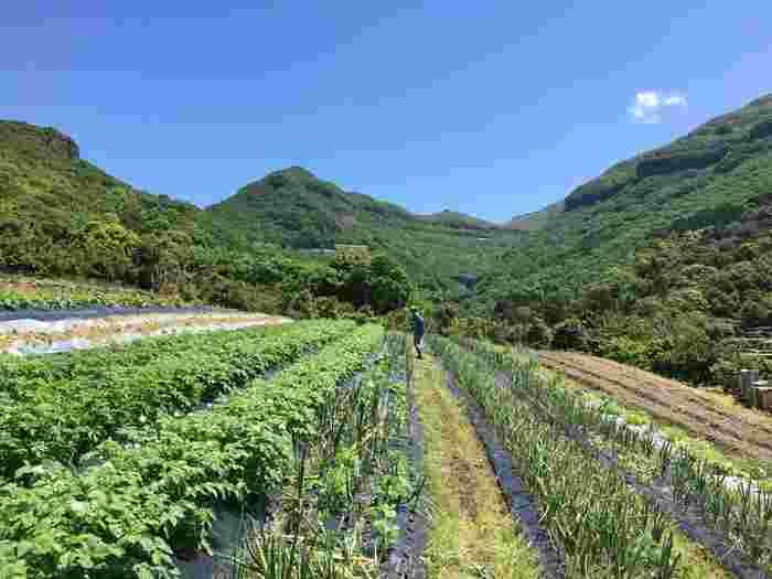小豆島ひとやまの農家カフェ。「HOMEMAKERS(ホームメイカーズ)」の旬野菜を味わおう