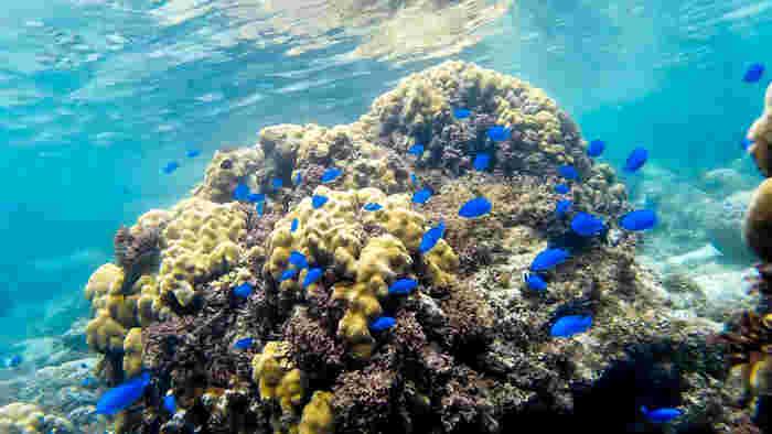 珊瑚の間を色鮮やかな熱帯魚達が泳ぎ回る様を、海面が鏡のように映し出し、海の中は神秘的な光景が広がっています。