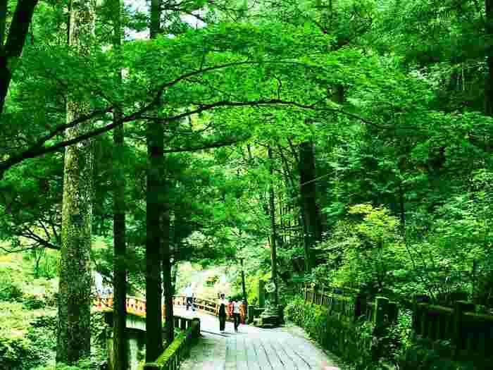 石畳と階段が交互にあり、途中、「随神門」や「神幸殿」、「矢立杉」など見どころも多いので、楽しみつつ参拝できるでしょう。