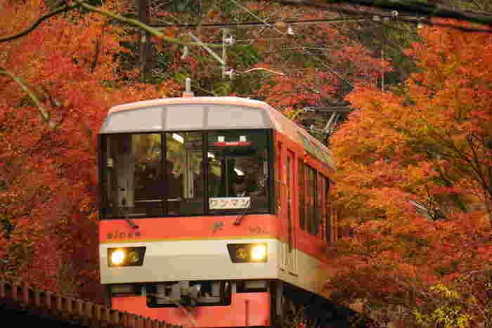 """出町柳から、""""京都の奥座敷""""と称される貴船口・鞍馬方面へと向かう、叡山電車の鞍馬線。大きな車窓いっぱいに紅葉を楽しめる圧巻の紅葉スポットがあるんです♪  そこは、「もみじトンネル」と呼ばれる、市原駅~二ノ瀬駅までの約250mの区間。列車が通る線路沿いは約280本のモミジに囲まれ、秋には真っ赤に染まった神秘的な紅葉狩りが楽しめますよ。"""