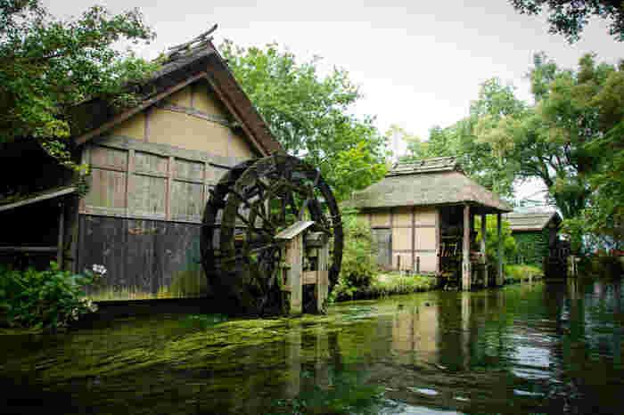 大王わさび農園には、黒澤明監督の映画「夢」のロケ地になった水車小屋があります。水車小屋は清流に沿ってゆったりと流れ、四季折々の素晴らしい表情を見せてくれます。