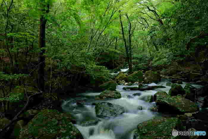 るり渓は、標高500メートルの高原に位置する清流と森林が織りなす渓谷で四季折々で美しい風景を見せてくれます。園部川沿いに沿って広がる渓谷は、約4キロメートルとなっており、園部川が高原の斜面を浸食してできたものです。
