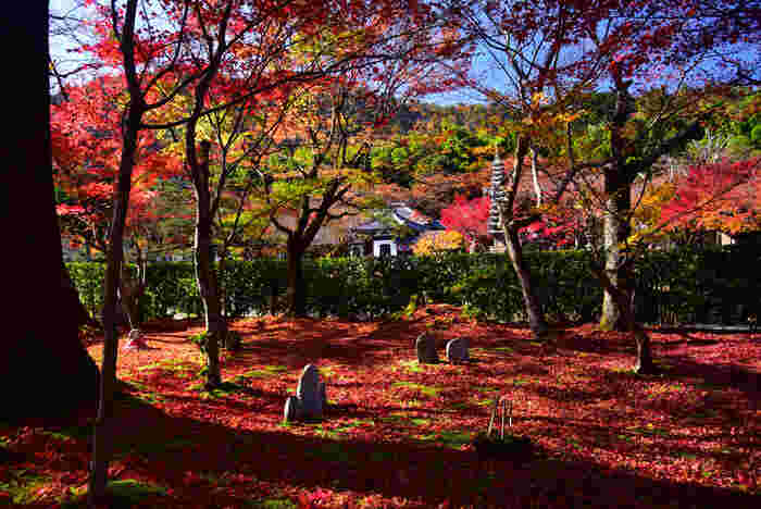 広い境内には、幾本もの落葉樹の樹々が植樹されています。晩秋になると、樹々が鮮やかに彩り、独特の魅力を持つ化野念仏寺の風情を引き立てています。