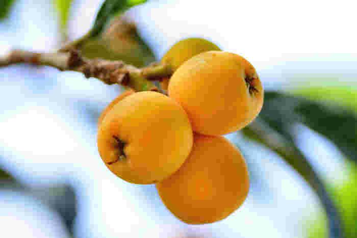 βカロチンなどが豊富で栄養価が高いびわ。バラ科ビワ属の樹木の実で、5月・6月の初夏が旬です。和のイメージが強いようですが、その上品で優しい甘さは洋菓子にもよく合います。