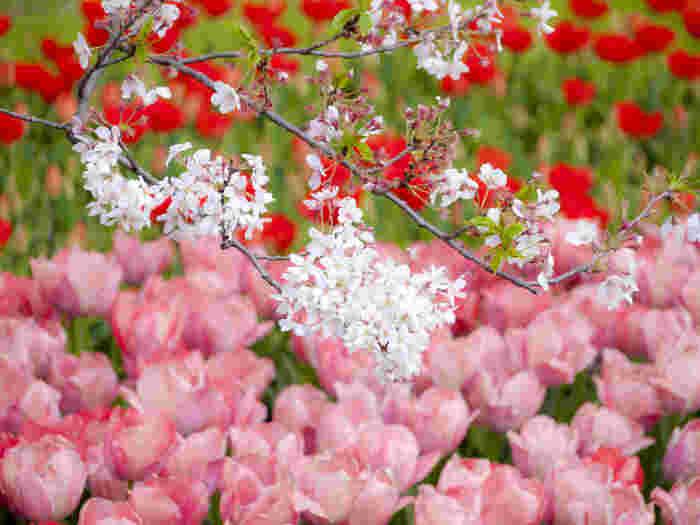 【早春~初夏】季節の花を見にいこう!関東のおすすめスポット&花言葉♪