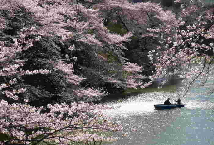 千鳥ヶ淵はお花見スポットとして有名ですが、平日でもすごい人出ですよね。そんな千鳥ヶ淵の桜を対岸から楽しむことができるのが、北の丸公園なんです。