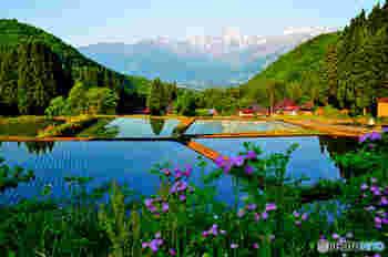 白馬村には、まだまだ素敵なスポットが沢山あります。心が洗われるような豊かな水をたたえた田園風景も、初夏の風物詩の一つ。