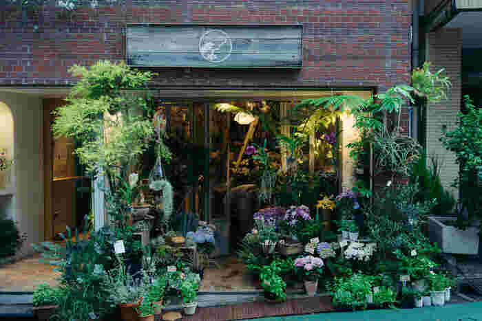 街のお花屋さんであるムギハナは、切り花以外にも鉢植え、エアプランツ、多肉植物、ドライフラワーなど、さまざまな種類を取り揃えています。日常に飾る花から特別な日のアレンジメントまで、頼りになるお店。住んでいる街にこんなお店があると、お花のある生活がしたくなりますね。