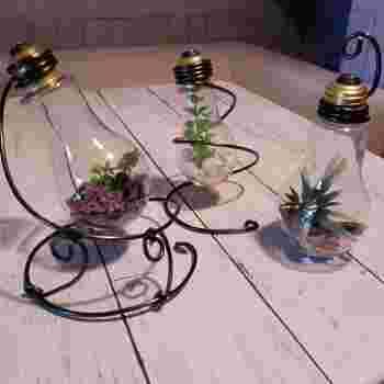 そのまま置くには不安定な電球。ペンチとニッパーでワイヤーを自由自在に曲げて、電球テラリウムのディスプレイスタンドはいかが?