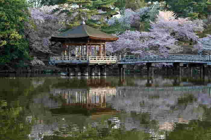 約500ヘクタールの広大な敷地を誇る奈良公園は、国の名勝に指定されています。景勝地の宝庫である奈良公園には、ヒガンザクラ、ソメイヨシノ、ヤマザクラ、ナラノココノエザクラなど約1700本の桜が植栽されています。
