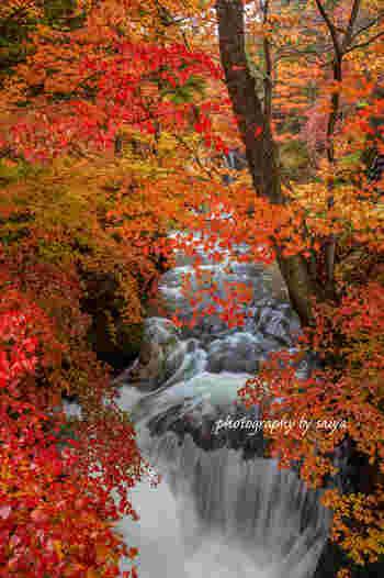 見頃は10月上旬。奥日光で最初に紅葉が楽しめるスポットとして有名な竜頭の滝。赤や黄色と鮮やかに色づいた木々と壮大な滝とのコラボレーションは圧巻の迫力です。