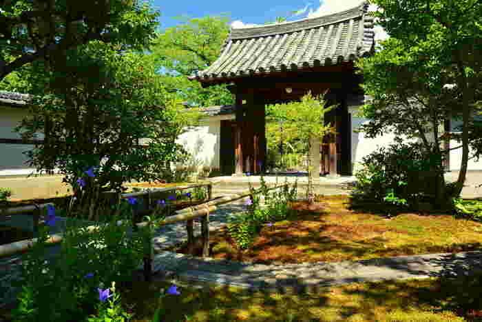 江戸時代初期に活躍した日本画家、俵屋宗達によって描かれた「風神雷神図」があることで、おなじみの建仁寺は、1202年に創建された臨済宗の仏教寺院です。