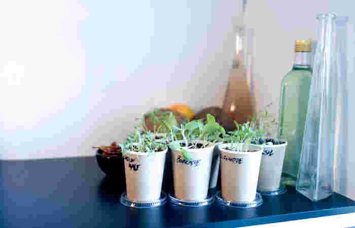 おうちで育てている、その観葉植物。どんな性質か知っていますか?大切にしていても、植物の性質を知らないときちんと育ってくれないことが…。植物の種類に合わせて、育て方を変えていきましょう。