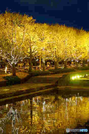 カナールイチョウ並木はライトアップも開催されます。水面に照らされた黄色は、うっとりするほどの美しさ。秋のデートにもぴったりですね。