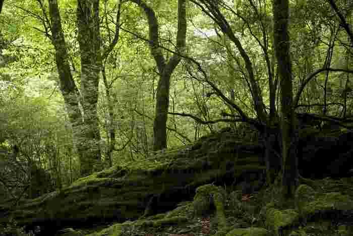 一つ目は、屋久島を代表とする、森林や滝など大自然に囲まれているところ。 みなさんもご存知の通り、自然の力とは本当に偉大なものですよね。ときに天災となって、私たちはその力の大きさを改めて痛感します。それほどの自然の力に、辺り一体包まれているような森や渓谷など生命力みなぎる場所はパワースポットとして知られていますね。