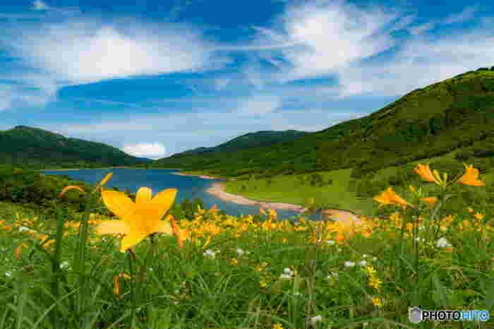夏には高原の冷涼な空気に包まれます。 湖畔にはノゾリキスゲやレンゲツツジなど300種類以上の高山植物が咲き乱れます。 ダム湖でありながら天然湖のようなたたずまいは、まるでヨーロッパの避暑地のようです。