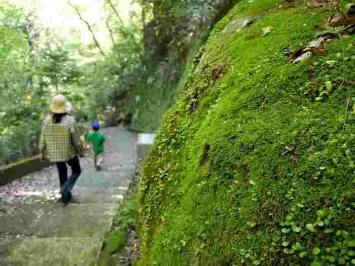 【宮ノ下駅から木賀温泉まで通じている「堂ヶ島渓谷遊歩道」。箱根の紅葉の穴場スポットで、渓谷沿いの豊かな景観が楽しめる。この遊歩道は、明治期に来日したチェンバレンが好んでよく散歩をしたということから「チェンバレンの散歩道」とも呼ばれている。】