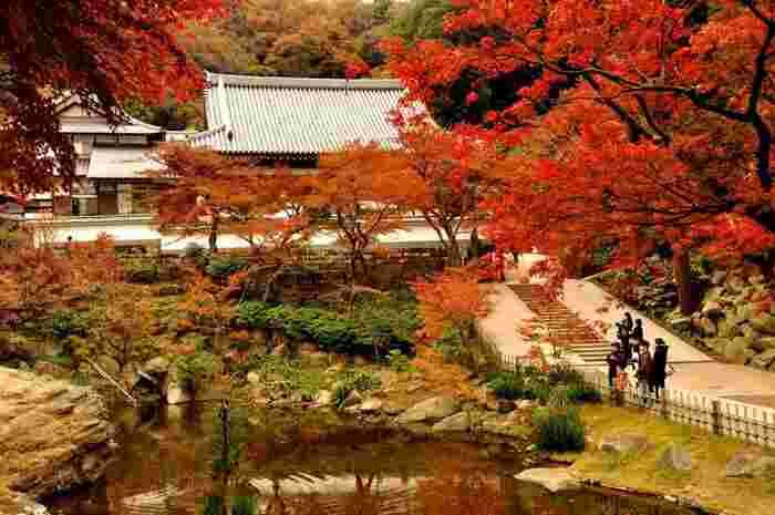 とても広い円覚寺の境内は見所満点!どこを切り取っても絵になる抜群の紅葉スポットです。