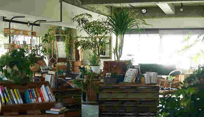 4Fはブックカフェ「ROUTE BOOKS」です。緑をいっぱい配置した癒しの空間になっています。打ちっぱなしの床、緑の美しさ、窓から差し込まれる光、もうすべてが素敵なんです。