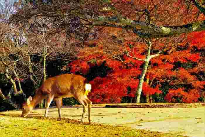 寺社仏閣が多く、鹿がいることでも人気の奈良。国内外からの観光客で賑わいますが、どこか穏やかな空気が漂っているのも魅力です。