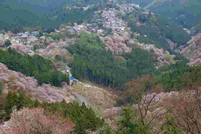 吉野山の中でも標高の高い「上千本」と呼ばれる地区には、人気眺望スポット、花矢倉展望台があります。
