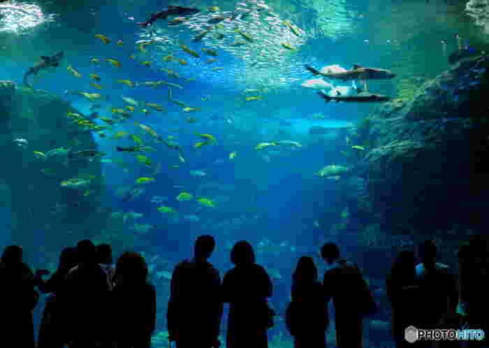 館内で1番大きい「相模湾大水槽」では、自然環境に近づけるように波の発生装置が取り付けてあります。岩場にぶつかる波の音を聴きながら、魚たちが泳ぐ姿や相模湾の岩礁を間近で観察することができます。