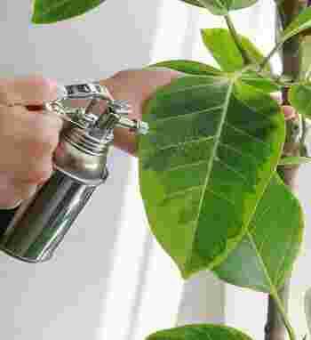 霧吹きで葉水を与えると、葉っぱの乾燥を防ぐので害虫対策になります。また、ホコリも落とすことができ、光合成がしやすくなるメリットも。こまめに葉水を与えることが鮮やかな葉っぱを保つ秘訣です。