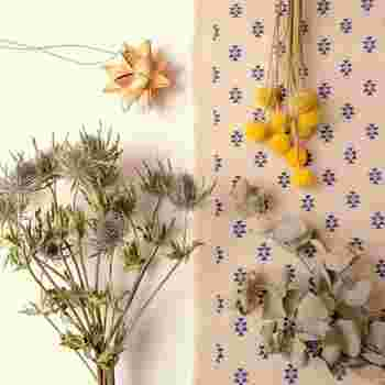 ポンポンになる日本でも手に入りやすい植物といえば、エリンジウム、クラスペディアなど。葉っぱでも実でもなく、お花なんです。