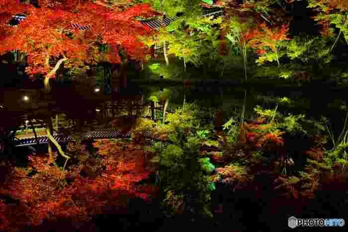 豊臣秀吉の正妻、ねねが秀吉の菩提を弔うために建立した高台寺では、秋になると特別拝観が行われます。広い境内が幻想的な灯りに照らされ、漆黒の闇夜に鮮やかに紅葉した樹々が浮かび上がります。特に、波一つない静かな臥龍池の水面が、灯りに照らされた樹々を鏡のように映し出す様は、神秘ささえも感じます。