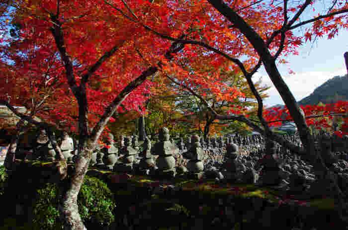 落柿舎からさらに北へ進んだ場所に位置する化野念仏寺は、811年に空海によって建立された浄土宗の寺院です。境内には「西院の河原」と呼ばれる無縁仏を弔う小さな石塔が無数に立ち並び、独特の景観が広がっています。